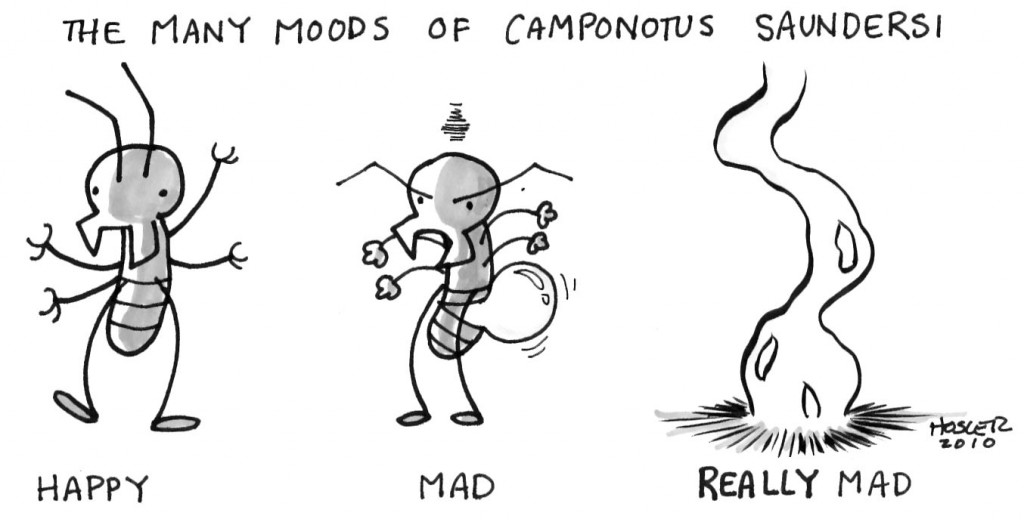 camponotuscartoon