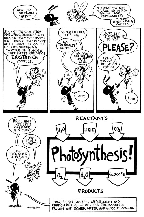 Photosynthesis_02